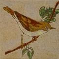 vogel-11