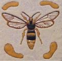 grote-vlinderwesp