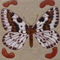 harlekijnvlinder